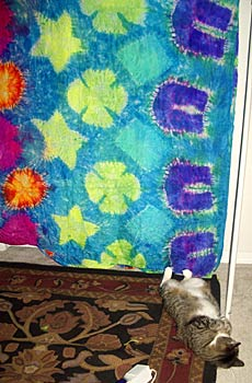Kitty Pictures – More