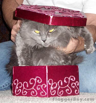 Kitty Pictures – Christmas