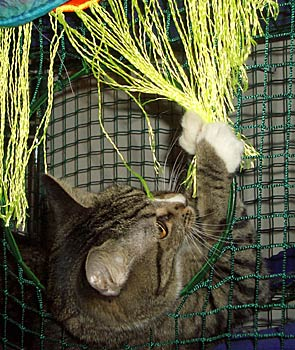 Kitty Pictures – Flagging